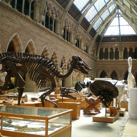 oxford museum-144135_640